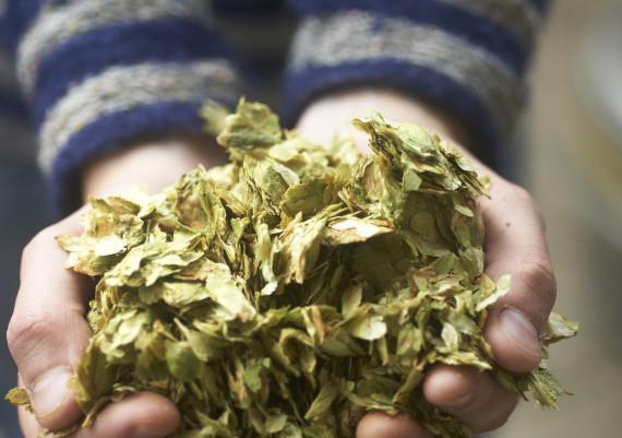 Handfull of hops