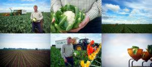 Farming Lincolnshire Supermarkets