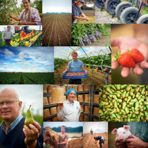 farming UK fresh harvest